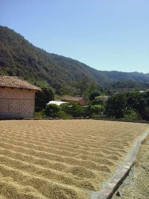 Coffee drying in Honduras