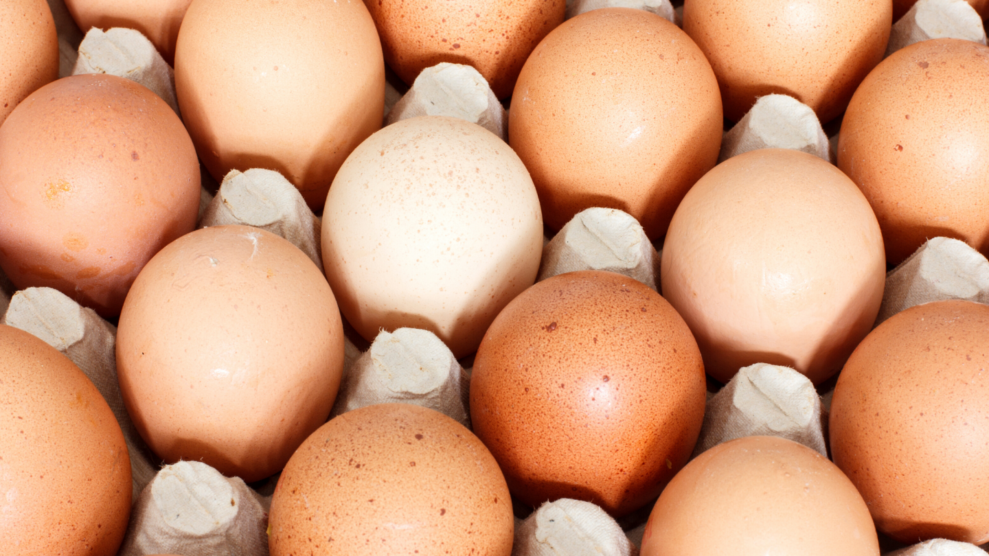 Everything you need to know about eggs for breakfast